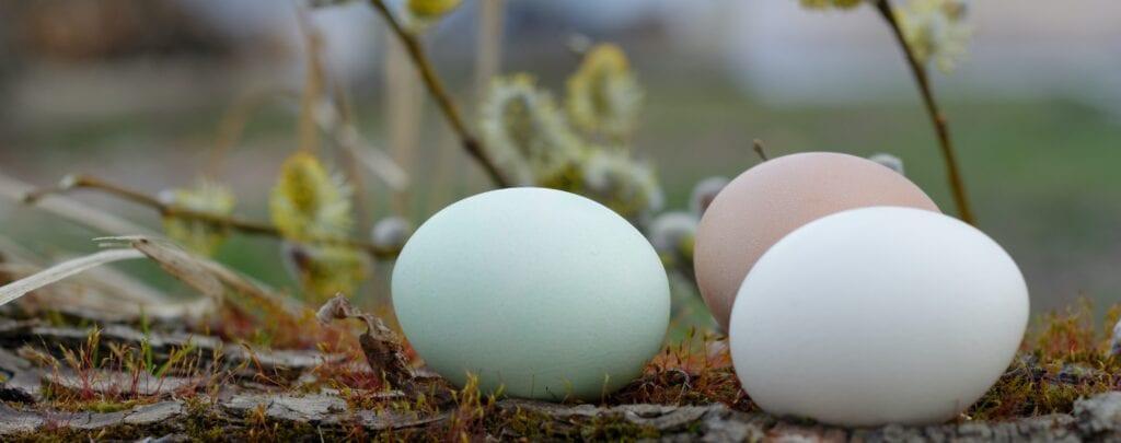 Nimm an unserem Oster-Gewinnspiel teil!